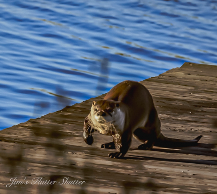 This image has an empty alt attribute; its file name is unhappy-otter.jpg